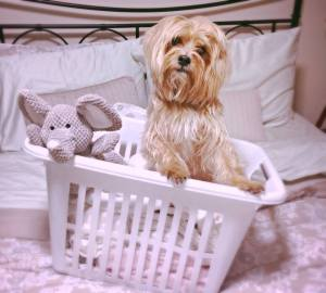 Bachy in Laundry Basket
