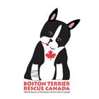 boston_terrier_rescue_canada