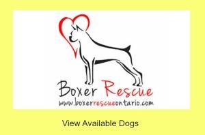 Boxer Rescue Ontario