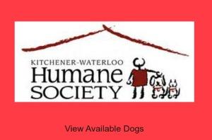 Kitchener Waterloo Adopt Dogs