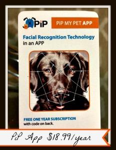 PiP App