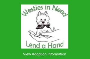Westies in Need Adopt