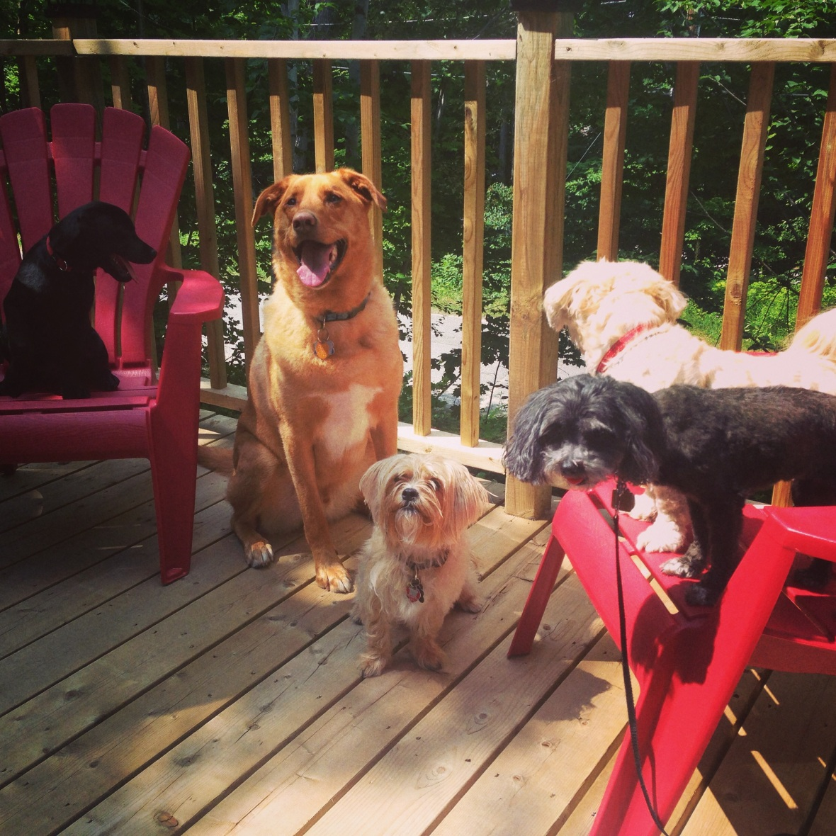 Give a Dog a Bone, Dog Blog, dog stuff, pets