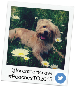 Pampered Pooches 2015, PoochesTO2015, Pampered Pooches Festival, Pampered Pooches Toronto, Give a Dog a Bone, Give a Dog a Bone Blog,