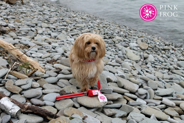 Pink Frog Pet RPoducts, give a dog a bone, dog harness, neoprene dog, new pet products, leash,