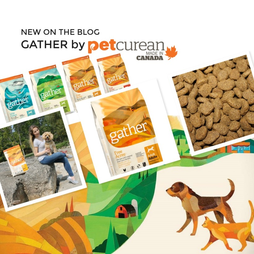 Petcurean, Gather Dog Food, Vegan Dog, Vegan Pet, Pet Health, Canadian Dog, Give a Dog a Bone Blog