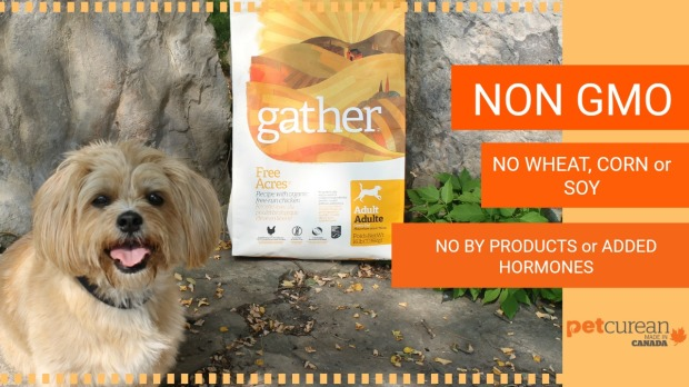Petcurean, Gather, vegan dog, glutenfree dog, allergy dog,