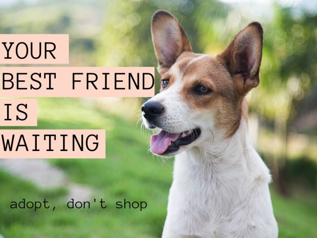 give a dog a bone, adopt, rescue resources